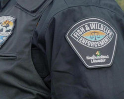 Possible Poaching Incident in Corner Brook